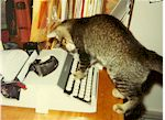 Cat Typing